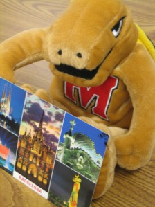 Roaming Testudo loves hearing about awesome journeys, at UMD and beyond!