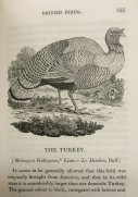'A History of British Birds', 1826