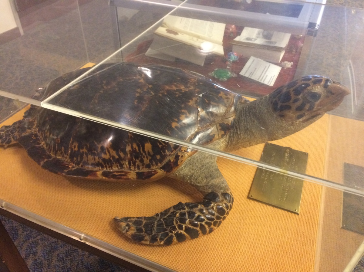 Turtles, Terrapins, and Tortoises...Oh My!